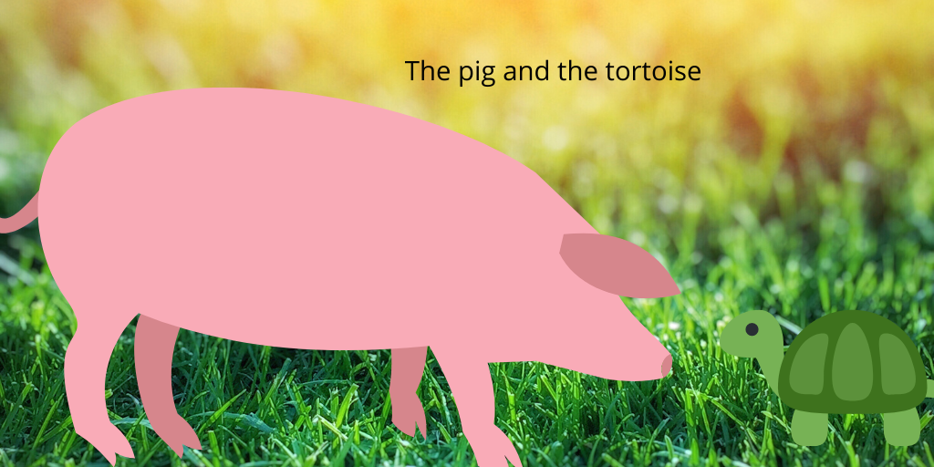 The tortoise and the pig